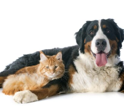 How to Prevent Fleas and Ticks on Pets | Pittsburgh | Bactronix